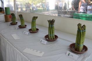 asparagus fest 062